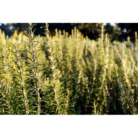 Miel de Forêt IGP 125 g
