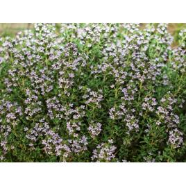 Amandes de Provence 10 kg
