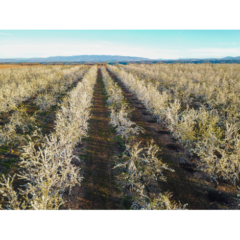 Herbes de Provence 25g