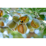 Real Provence almond, 500 g