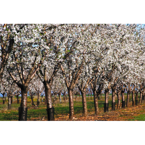 Pur jus de pommes de Provence
